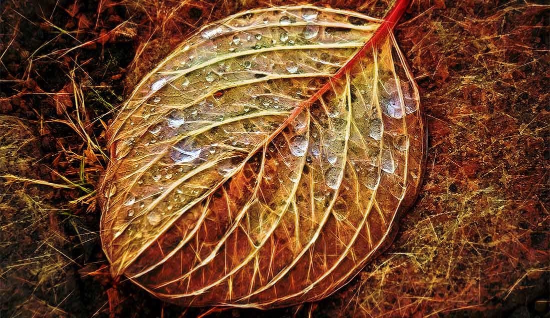 Autumn-Leaf_Höstutflykt_1100-x-637-px_WEB_A220229-1-1-1